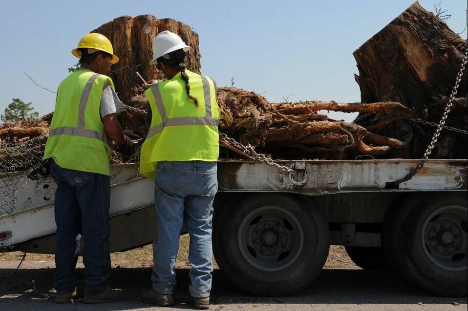 Workers removing a tree stump
